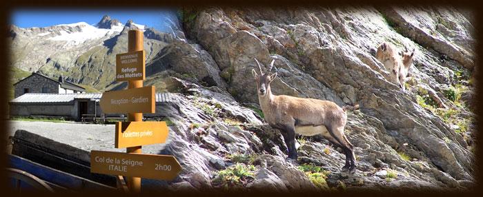 Activités autour du Refuge des Mottets - Tour du Mt Blanc
